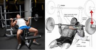 Incline Barbell Bench Press  Chest Exercise Guide With PhotosIncline Bench Press Grip