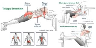 arm exercises without equipment 5 workouts for arm muscle strength size and definition