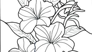 Floral Coloring Pages Kondratovichme