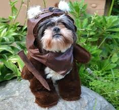 star wars dog costume the season for dressing your up and making them look like an star wars dog costume