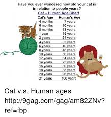 Have You Ever Wondered How Old Your Cat Is In Relation To