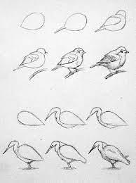 How to Draw Birds by elva   Bird drawings, Drawings, Pencil art drawings