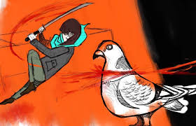 how to catch and eat a pigeon broke