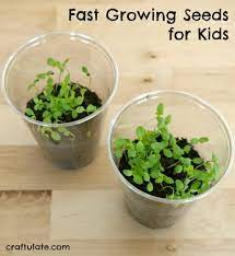 fast growing seeds for kids craftulate