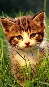 Best 48+ Kitten Backgrounds for Phones ...