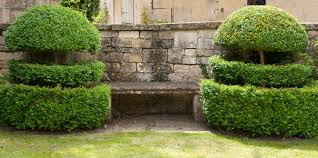 Small Picture Low hedges a few alternatives to Box Lisa Cox Garden Designs Blog