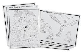Owl Pellet Bone Chart Elementary Owl Pellet Kit Teaching Supplies Biology Classroom