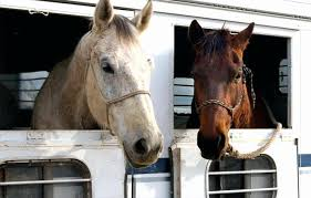 Horse Shipping Quotes Stunning Horse Shipping Quotes Precious Horse Shipping Quotes And Best Horse