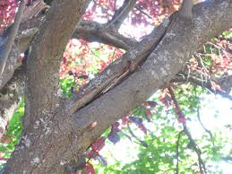 Tree Risk Assessment Risk Management Plans Community