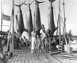 Hawaii Fishing Seasons Chart Marlin Fishing Wikipedia