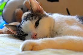 Die spinne hängt an der decke. Unsaubere Katze 10 Grunde Und Tipps Haustiermagazin