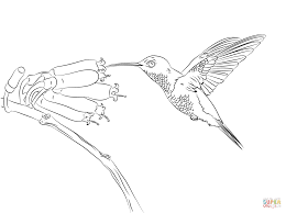 Small Picture Hummingbird coloring page Free Printable Coloring Pages