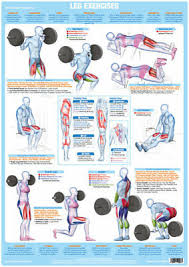 Weight Training Chart With Pictures Leg Muscles Weight Training And Body Building Poster