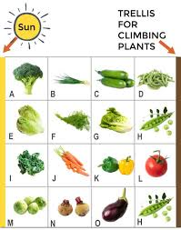 how to grow your first vegetable garden