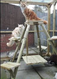 the pyramid cat tree