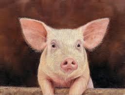 pig painting pig by david stribbling