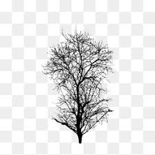 Dry Tree Png Vector Psd And Clipart With Transparent Background