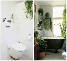 Apartment Therapy Bathrooms Apartment Therapy Plants Benefits Of Houseplants And How To