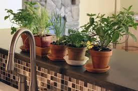 Kitchen Window Herb Garden Kit Indoor Herb Garden Kits To Grow Herbs Indoors Hgtv