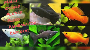 Freshwater Compatibility Chart Aquarium Fishes
