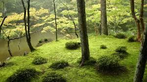 the famous moss garden of saiho ji kyoto japan