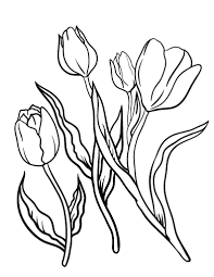 Small Picture Free Tulip Coloring Page