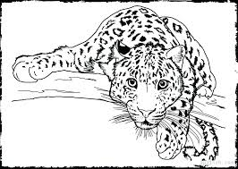 Cute Animal Coloring Book Pages Animal Pictures Coloring Pages