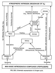 The Nitrogen Cycle With Diagram Soil Microbiology