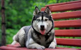 most beautiful dog breeds in the world. Exellent The 10 Most Beautiful Dog Breeds In The World1 On In The World