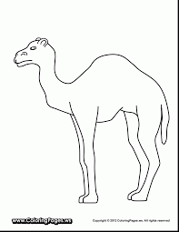 Small Picture wonderful camel coloring pages amazing desert uncategorized with
