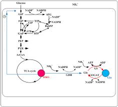 Apa Journal Citation Multiple Authors Wiring Diagram Database