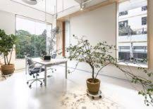 modern office plants. View In Gallery Large Indoor Plants, A World Of White And Natural Light  Create Lovely Office Modern Plants