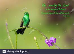 Inspirational, encouraging and uplifting Bible Verses printed on beautiful  bird photography Stock Photo - Alamy