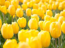 spring flowers free photo