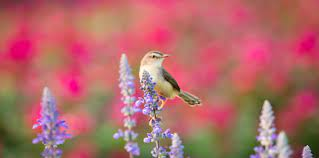 Which Birds Are Active This Summer? - Varment Guard Wildlife Services