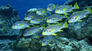Image result for fish and green rocks