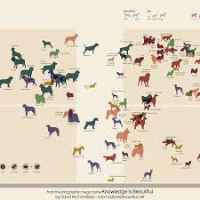 dog chart a definitive ranking of the most overrated and underrated