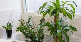17 Best Bathroom Plants, How To Use, How To Choose, No Light or Upright