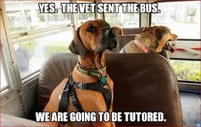 Short bus Dogs - WeKnowMemes Generator via Relatably.com