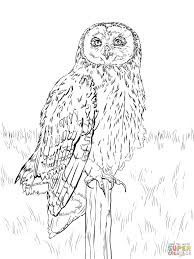 Barn Owl Coloring Page Realistic Pages 2 Futuramame