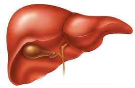 Dinh dưỡng cho người bị viêm gan mãn - 1