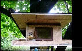 minimalist squirrel house plans free home ideas squrrel houses