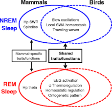 Difference Between Amphibians And Reptiles Venn Diagram Avian Versus Mammalian Sleep The Fruits Of Comparing Apples