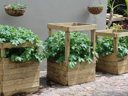 Small Picture 53 best Growing Potatoes images on Pinterest Grow potatoes
