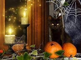 cat waiting for halloween HD wallpaper ...