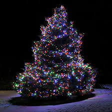 outdoor led christmas tree lights. great outdoor lighted christmas trees led tree lights