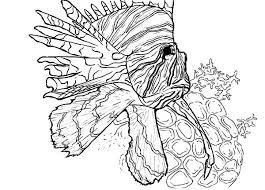 Coral Reefs Coloring Pages 2149568