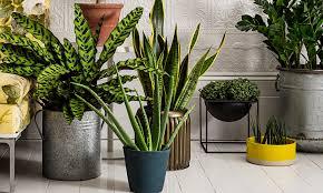 plants feng shui home layout plants. Houseplants For Any Kind Of Light Martha Stewart Kevins Houseplant Feng Shui Decorating Dos And Donts Plants Do Home Layout