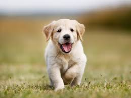 cute puppy pictures in honor of