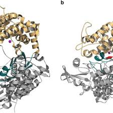 overall structure of human dipeptidyl peptidase iii a cartoon representation of the structure